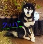 DSC_4112_20200508151953b81.jpg
