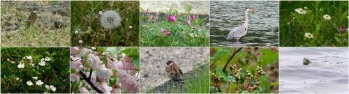 自然がいっぱいの写真