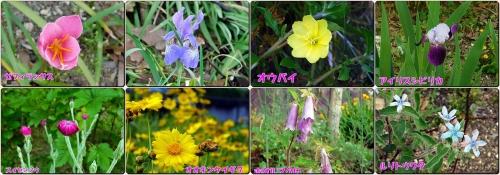 今日も沢山のお花が