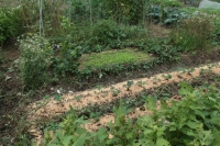 BL191026イチゴ植え付け3IMG_7746