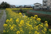BL200309福岡日帰り1-6IMG_3582
