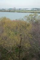 BL200313淀川右岸から帰宅7IMG_3753