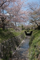 BL200414天神橋~星田2-8IMG_4120