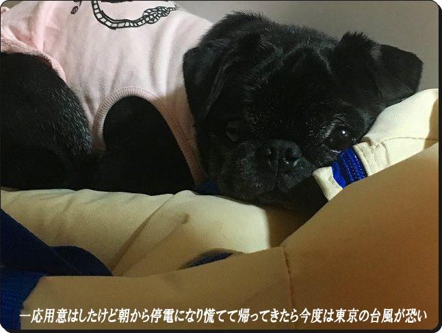 東京の台風ラスト