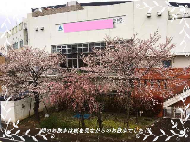 1お散歩桜