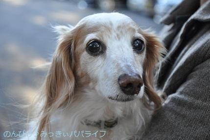 hatsumoude202003.jpg