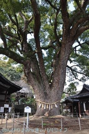 hiroshimayamaguchi202002049.jpg