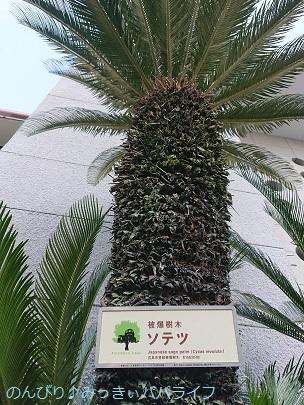 hiroshimayamaguchi202002110.jpg