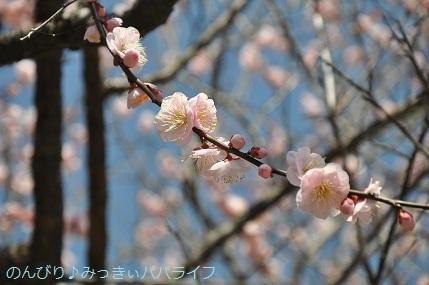 hiroshimayamaguchi202002230.jpg