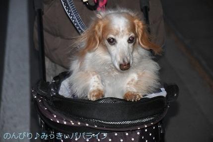 yakitori20191201.jpg