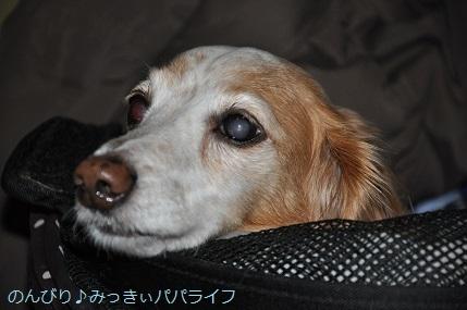 yakitori20191202.jpg
