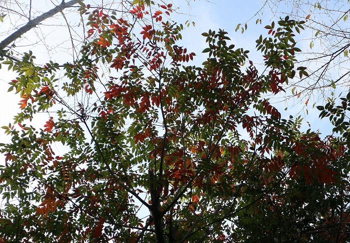 爺神山の紅葉始まりかな 1 10 26