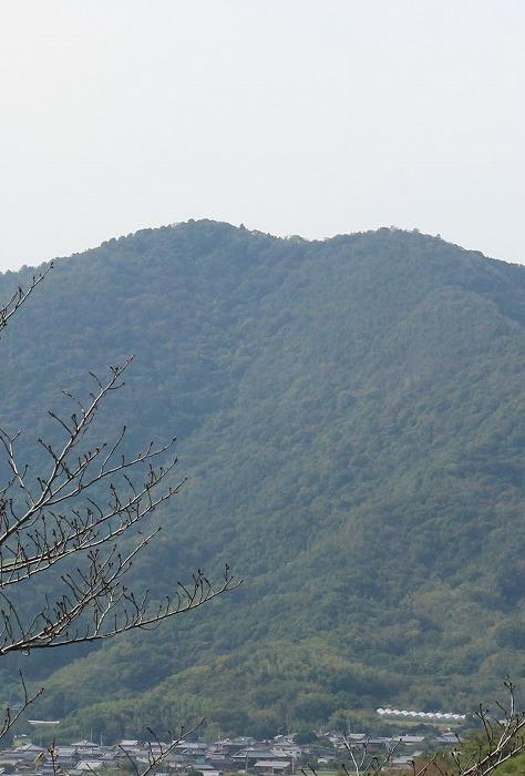 一番高い所に天涯桜(山桜 )在 1 10 28