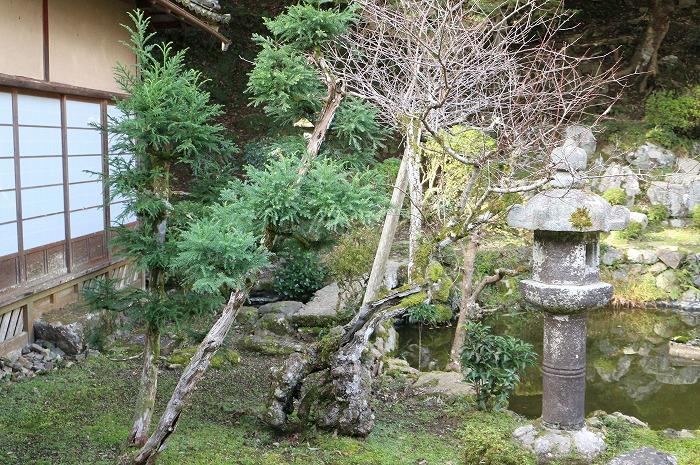 枯れたような木から緑の葉 1 11 19