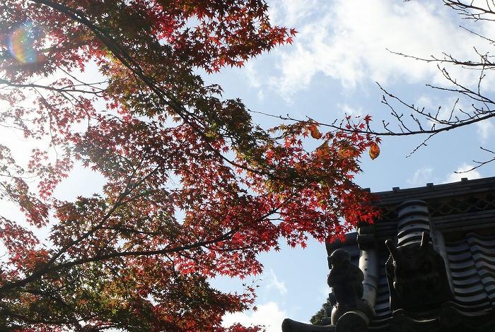 西教寺 瓦の猿と鬼と楓と 1 11 19