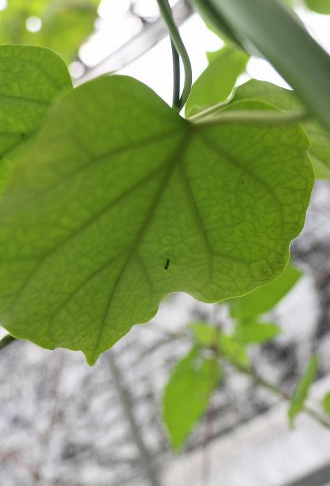 縦に 4番目なので小さい 幼虫 1 11 18