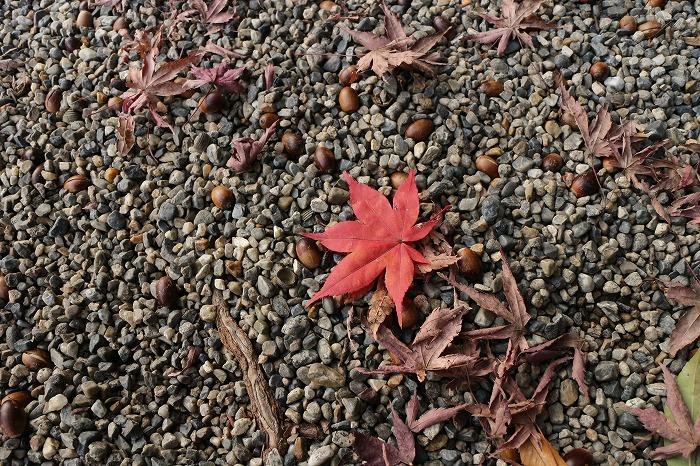 勅使館の楓落ち葉 1 12 5