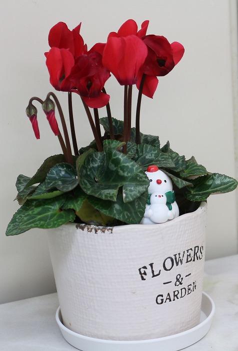 下幼 廊下に飾りのお花 1 12 13