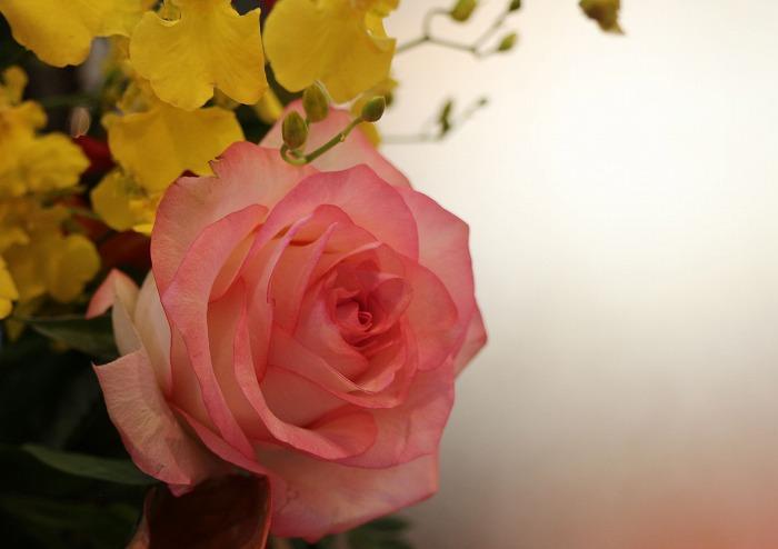 グランドホテルの玄関の花たち 2 1 18