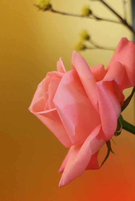 観信100周年記念お祝いの花たち 2 1 18