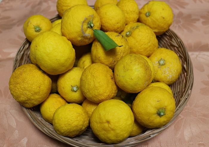 柚子いっぱい 2 1 22