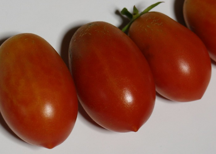 タマリロ トマトみたいやな 2 1 24