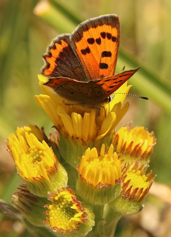 名前のわからん花に小さい蝶々 2 2 11
