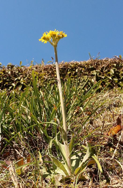 なんか見たことない草の花 2 2 11