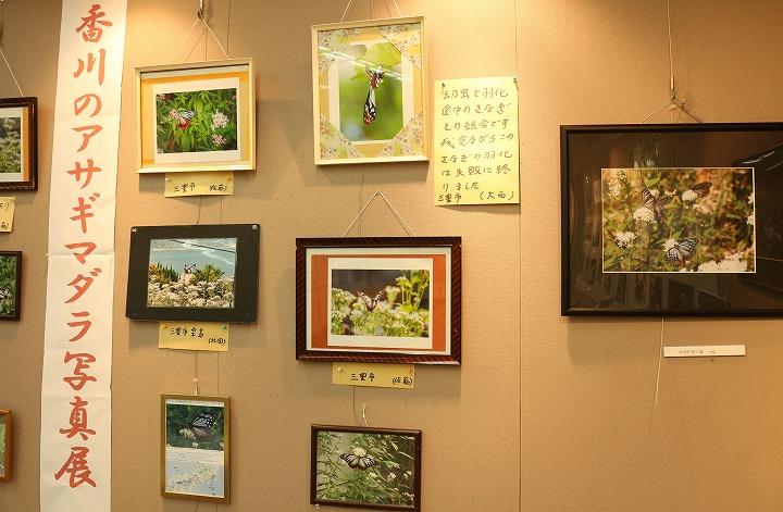 香川の浅葱斑写真展 2 2 16