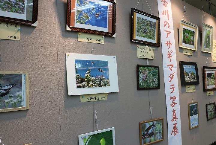 香川の浅葱斑写真展 観音寺 2 2 16