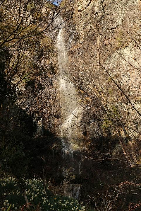 水仙と不動の滝 2 2 13