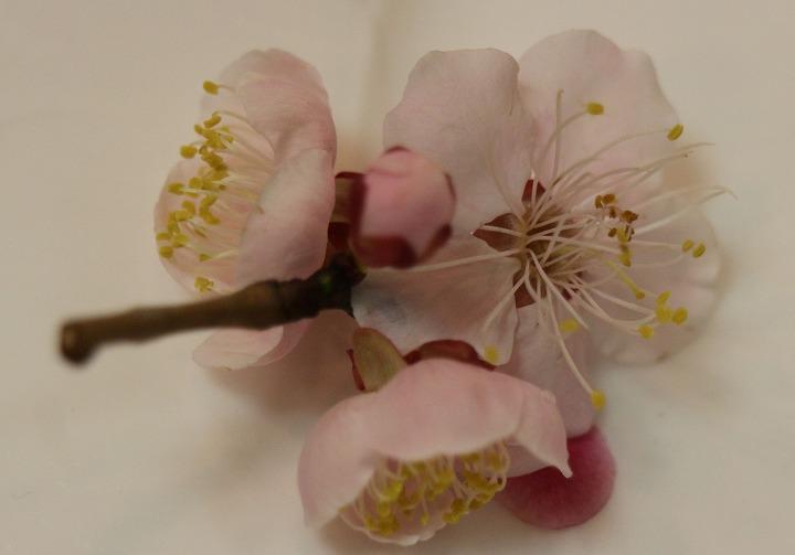 デザートのお皿に春の花 2 2 29