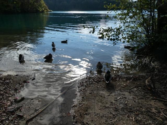 6日プリトヴィットェ国立公園 (73)_resized