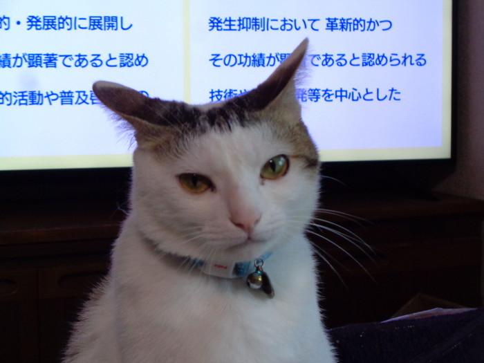 daichi0166.jpg