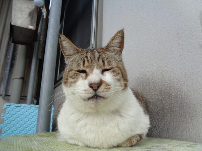 mi-kun0103.jpg