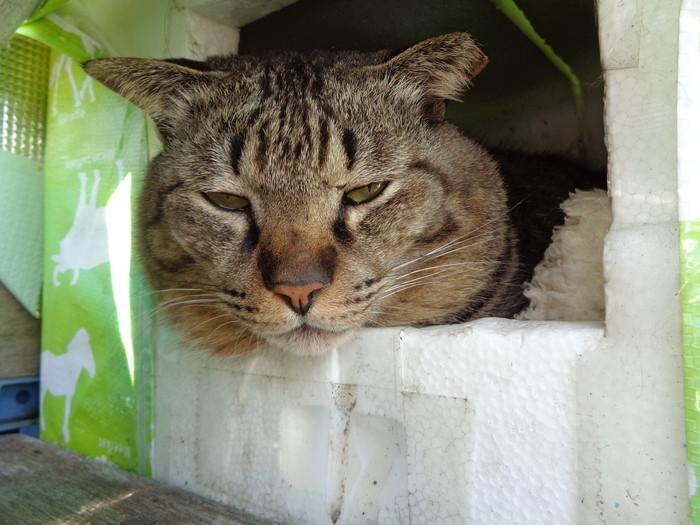 torajirou0163.jpg