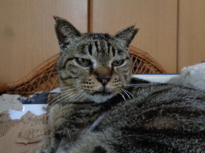 torakichi0156.jpg