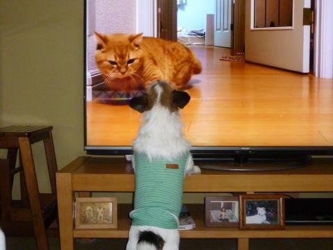 テレビの前で(1)