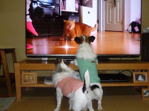 テレビの前で(2)