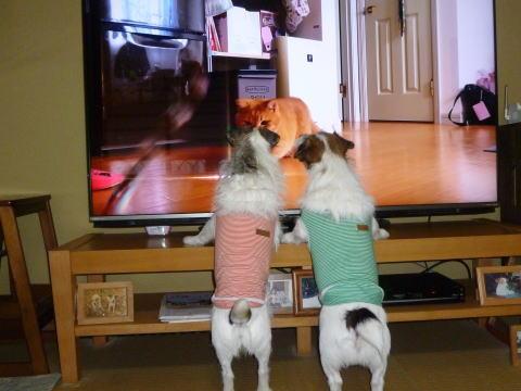 テレビの前で(3)