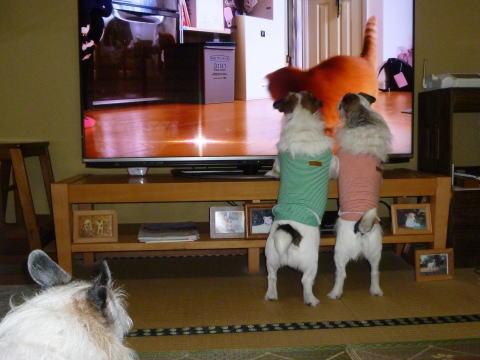 テレビの前で(4)