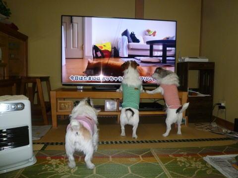 テレビの前で(5)
