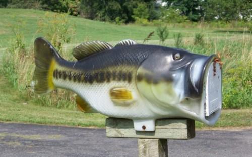 mailboxfish1-e1502221570777 (Custom)