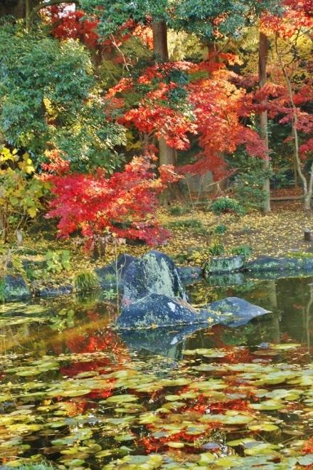 水面にも紅葉が
