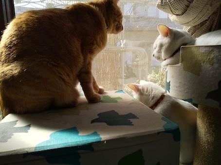 白猫プラスナミ