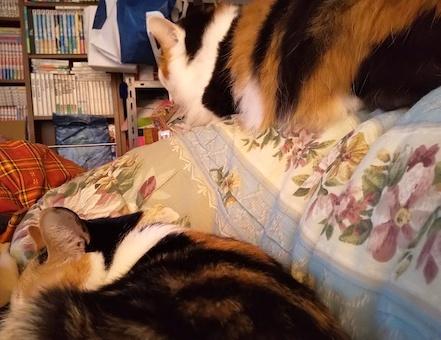 三毛猫セット1