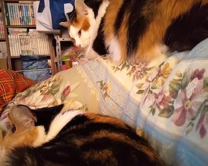三毛猫セット2