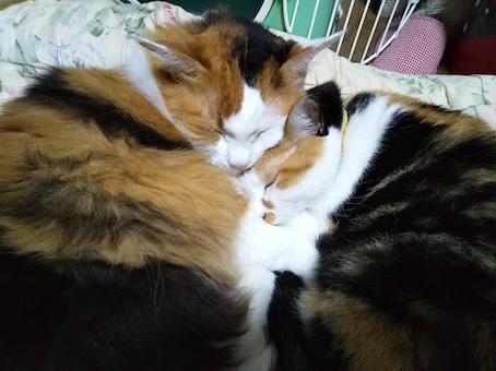 三毛猫セット