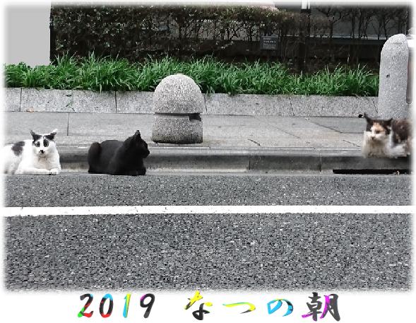 いのちの坂道