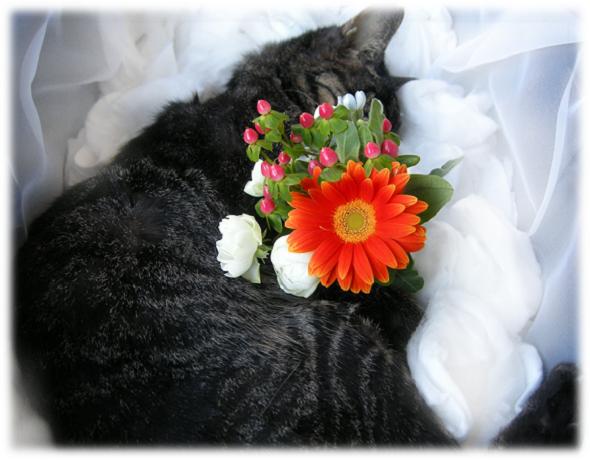 6最後の花